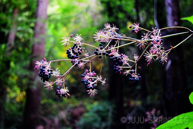 Juju Sprinkles Fall Inspirations 12