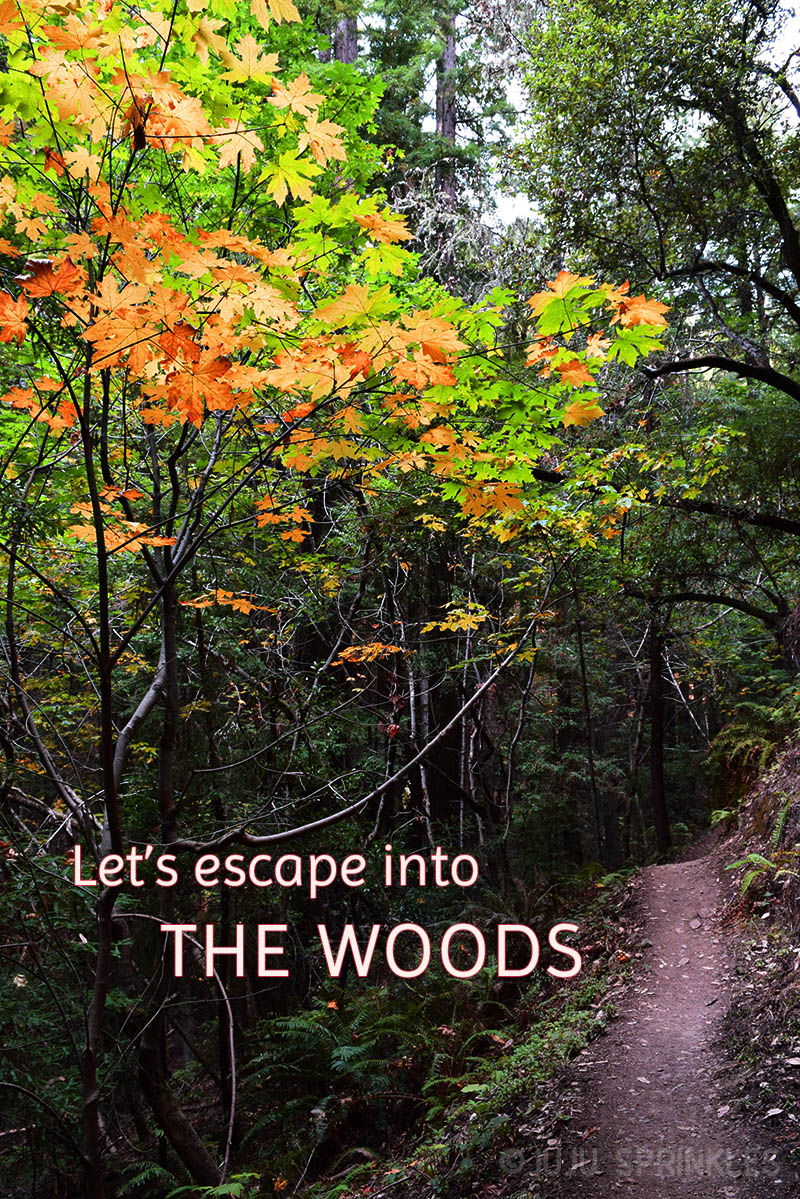 Juju Sprinkles Fall Inspirations Escape into Woods